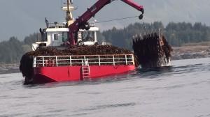 Trawler comb adj